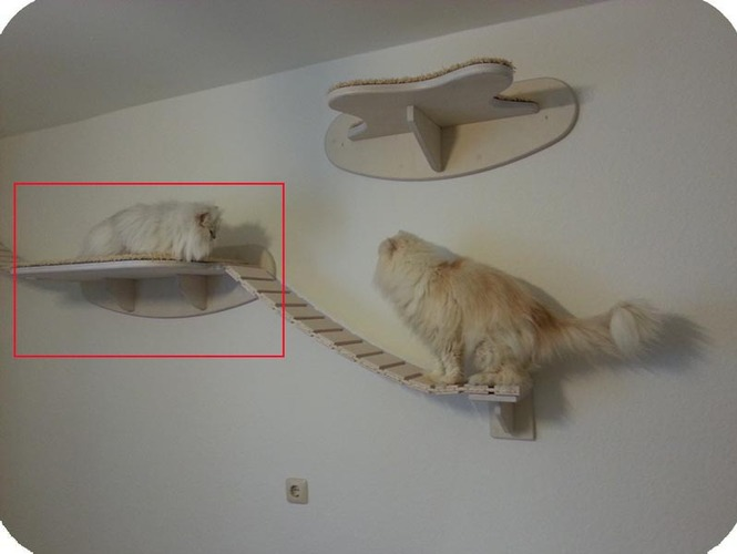 как выбрать лежак для кота